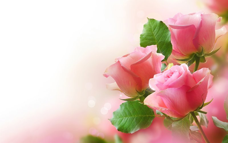 Carmel Rose Kay