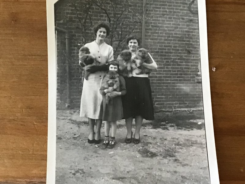 Aunty Jean (on the left) with her older sister Pamela (my Mum) and not sure who the little girl is but they are holding Nana Rawlings chow puppies