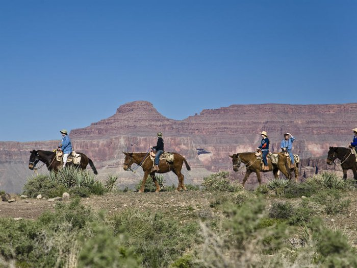 Four riders on horseback trekking along the Grand Canyon.