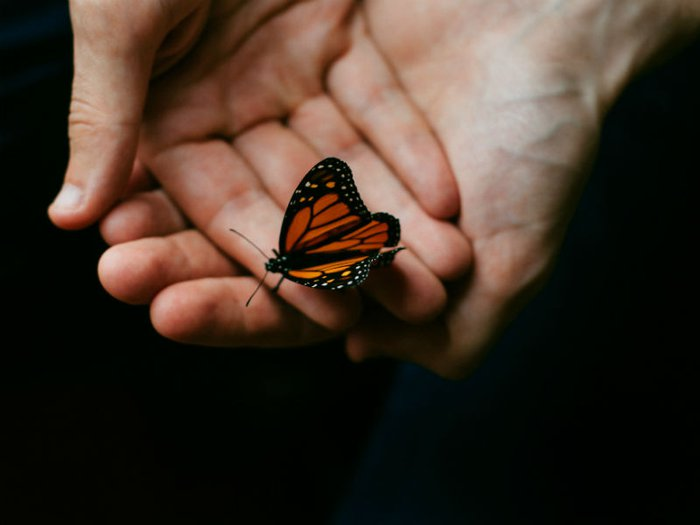A butterfly sitting on gently cupped hands