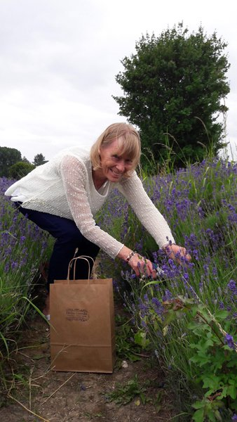 Picking at Hitchin Lavender Fields