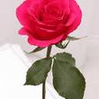 Cynthia Margaret Plant