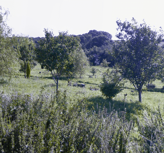 South Yorkshire Woodland Burial Ground