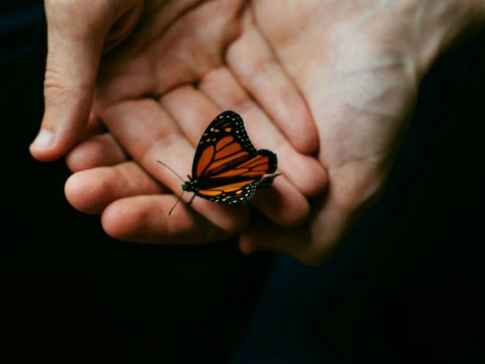 A butterfly sitting on gently-cupped hands
