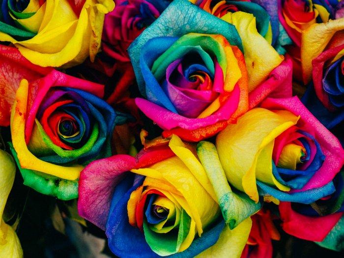 Rainbow coloured flowers