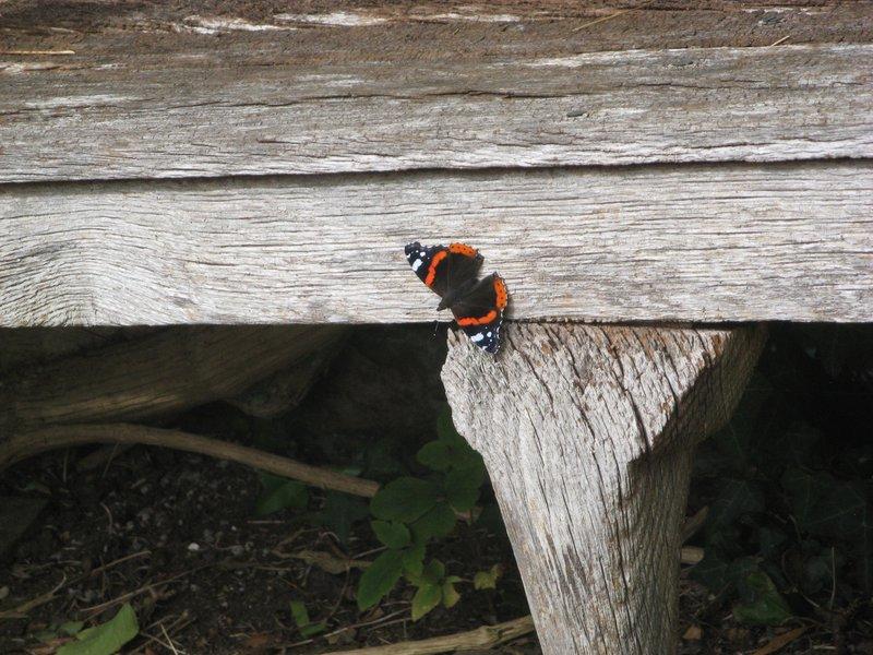 Betty loved butterflies !