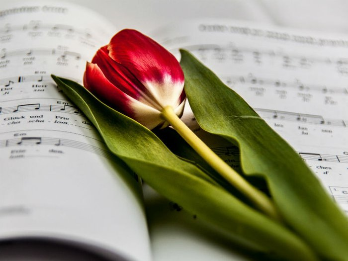 Red tulip on a hymn book